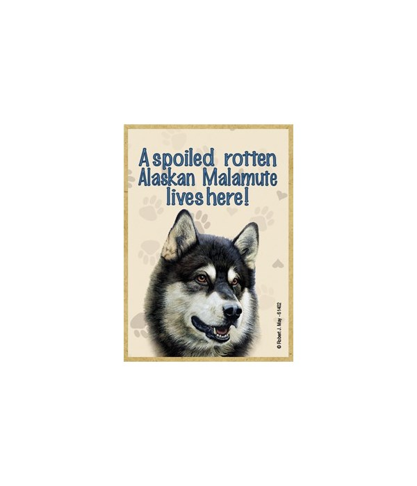 A spoiled rotten Alaskan Malamute lives