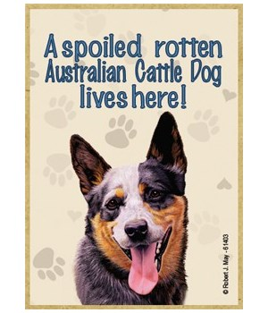 A spoiled rotten Australian Cattle Dog l