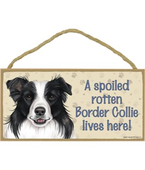 Border Collie Spoiled 5x10