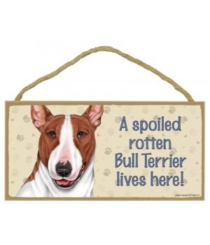 Bull Terrier (Brown and white) Spoiled 5