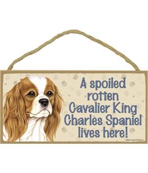 Cavalier King Charles Spaniel Spoiled 5x