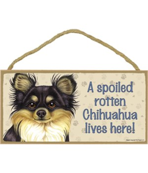 Chihuahua (Long haired, black and tan) S