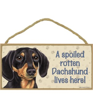 Dachshund (Black and Tan) Spoiled 5x10