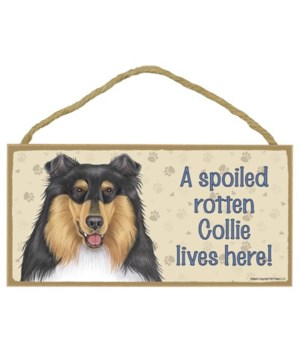 Collie (tri-colored) Spoiled 5x10