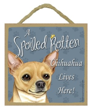 Chihuahua Tan Spoiled 5x5 Plaque