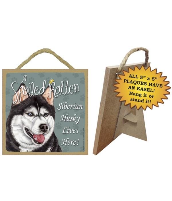 Siberian Husky Spoiled 5x5 Plaque