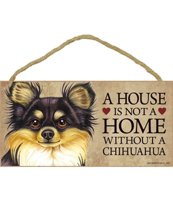 Chihuahua (Long haired, black and tan) H