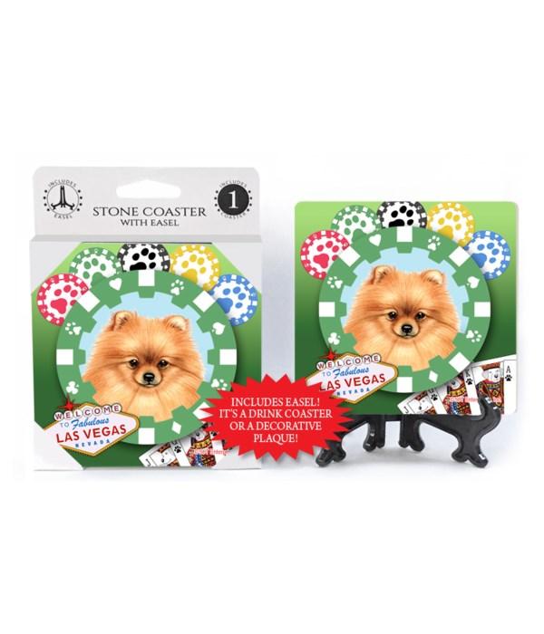 Pomeranian - Vegas Dog