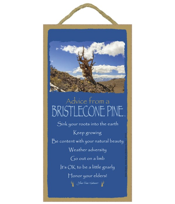 Advice from a Bristlecone Pine 5x10