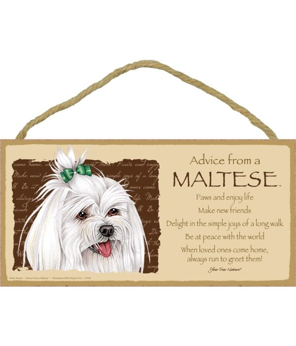 Advice from a Maltese (with bow) 5x10