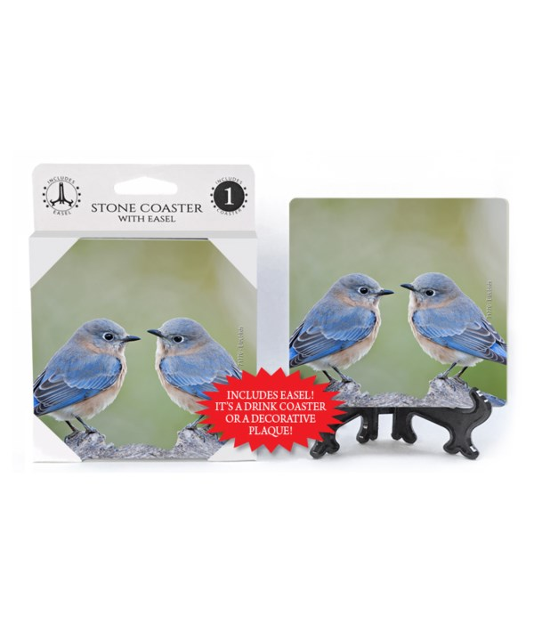 Blue Birds facing each other