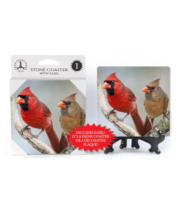 Cardinal - male and female perched next