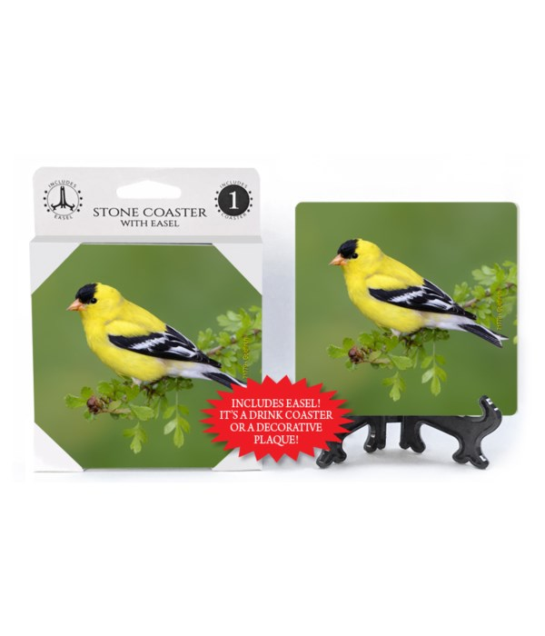 Goldfinch - green bkgd