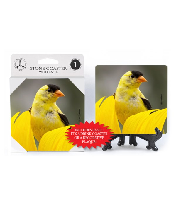 Goldfinch - yellow flower pedal