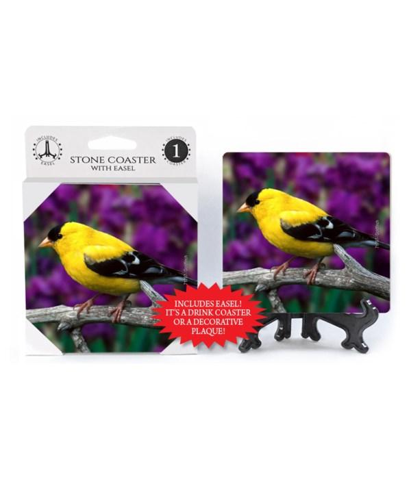 Goldfinch - Purple flower bkgd