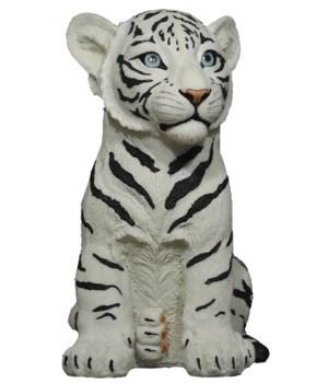 "11.25"" Rumba (Baby Tiger Wht) 4pcs/cs"