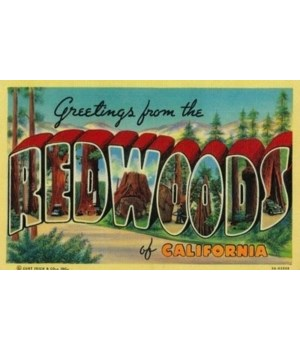 Greetings from the Redwoods of Californi