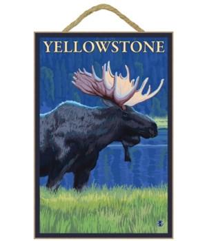 Moose at Night - Yellowstone National Pa