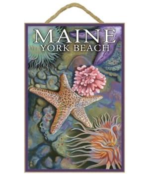 York Beach, Maine - Tidepool - Lantern P