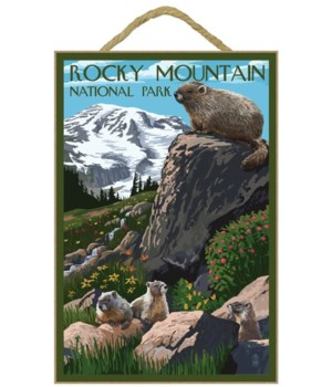 Rocky Mountain National Park - Marmots -
