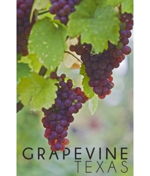 Grapevine, Texas - Wine Grapes on Vine #