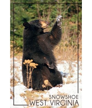 Snowshoe, WV - Bear Playing with Snow