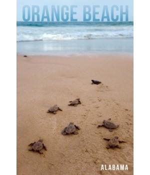 Orange Beach, AL - Sea Trutles Hatching