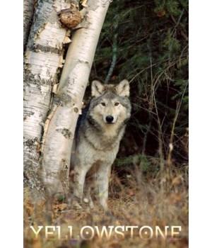 Yellowstone - Wolf in Forest - Lantern P