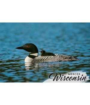 Mercer, WI - Loon & Chick
