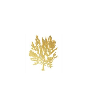 30x38 Blush Coral IV, Frame 36P0001O