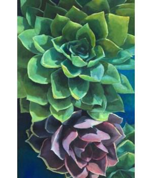 40x60 Succulents