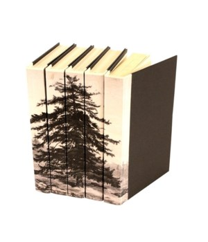 Image Collection, Spruce Tree, Set of 5