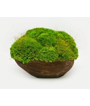 Mood Moss Bowl