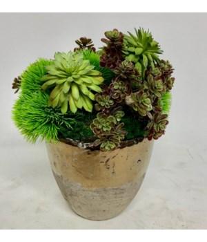 Grass, Sedum in Bronze Clay Pot