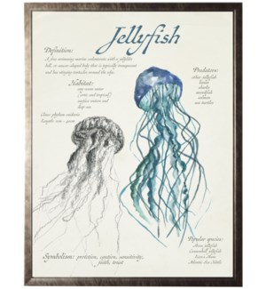 Watercolor and sketched nature study of a jellyfish