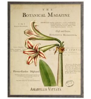 Amaryllis on botanical background