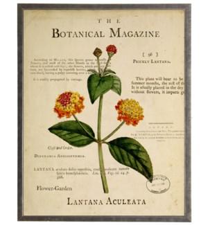 Lantana on botanical background