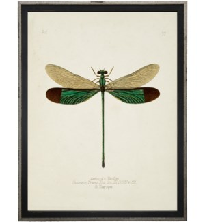 Dragonfly bookplate
