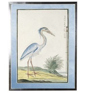Waterbird with pale blue border