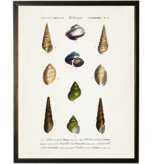 Ten neutral and green colored seashells