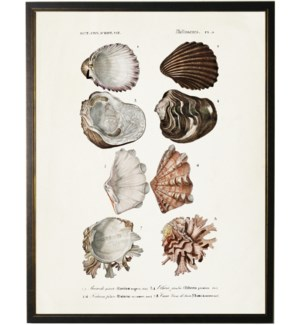 Eight clamshells