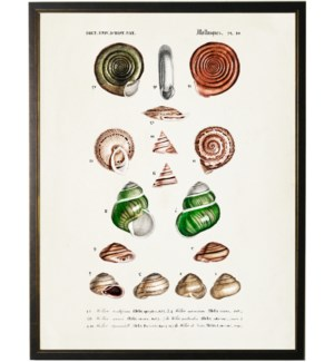 Sixteen snailshells