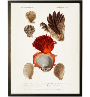 Seven shells with large red shell