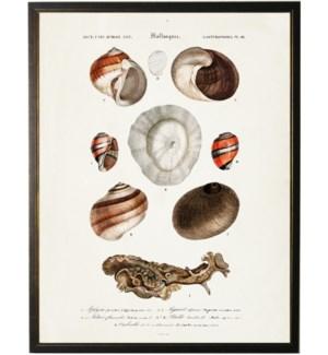 Nine shells  with spiral orange design