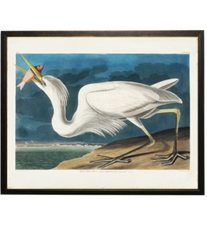 White pelican with orange fish