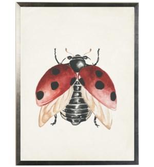 Watercolor ladybug wings