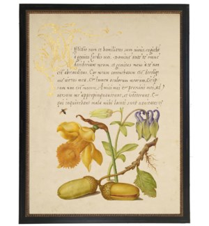 Vintage bookplate from the 1500s with calligraphy with Daffodil