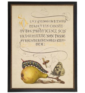 Vintage bookplate from the 1500s with calligraphy with Pear