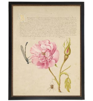 Vintage bookplate from the 1500s with calligraphy with Rose