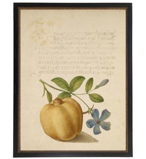 Vintage bookplate from the 1500s with calligraphy with Fruit